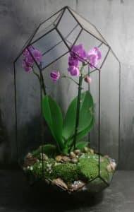 plants in glass bottles