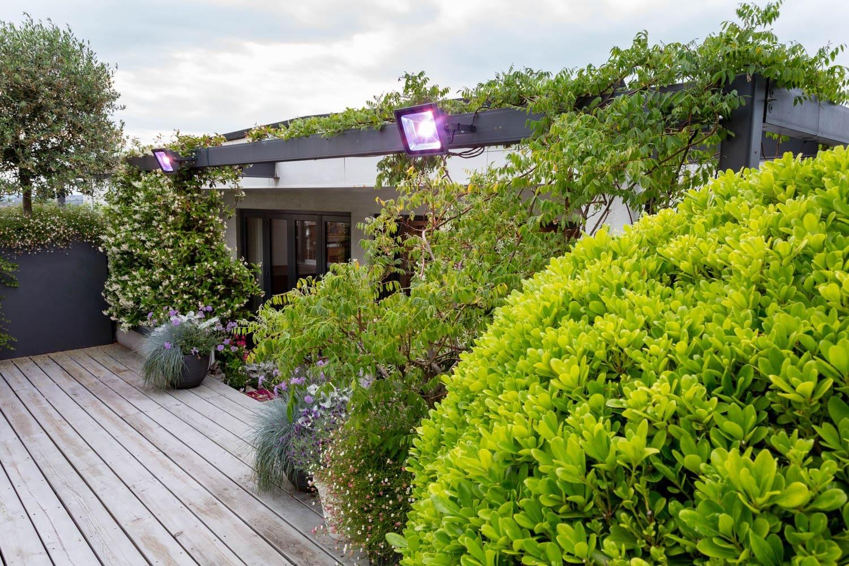 Roof Garden Sanctuary - Manoj Malde Garden Design